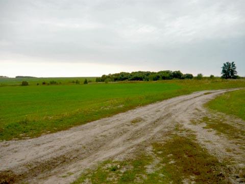 Дорога в Старое Киркино. Фото В.Докторовой, 2017