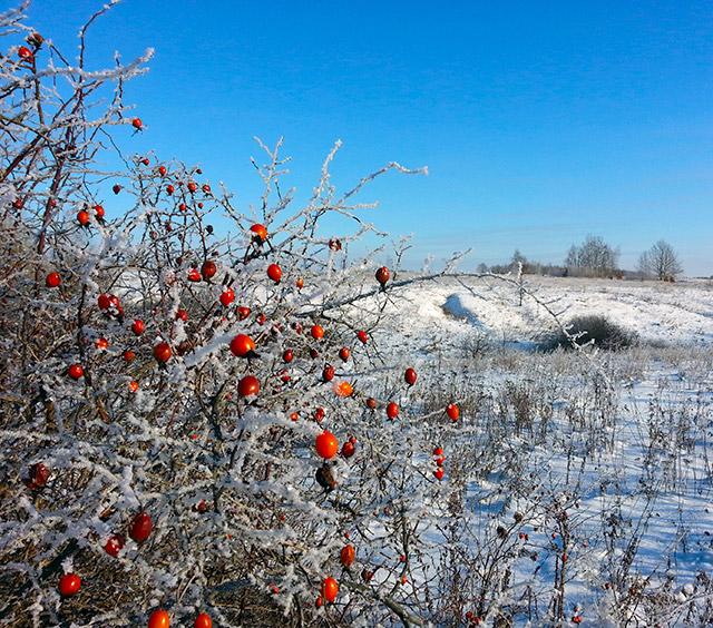 Фотография Бориса Конкина, январь 2014