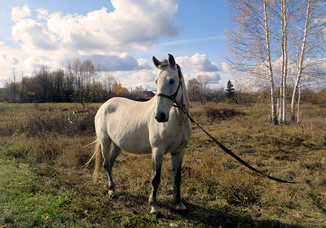 Конь же лихой не имеет цены