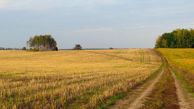 Окрестности села Старое Киркино. Фото 17.09.2015