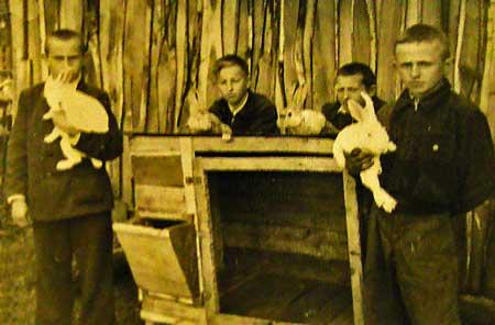 Кролиководческая ферма, 1953 год