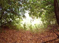 Дорога в осень. Киркинская посадка 2004 г
