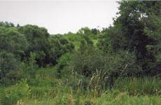 На горе, к которой можно перебраться вброд через речку, лесок и несколько 200 - летних дубов - вот все, что осталось от нашего семейного гнезда. Старое Киркино, 2010 г
