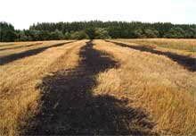 Окрестности села Ст.Киркино сентябрь 2004